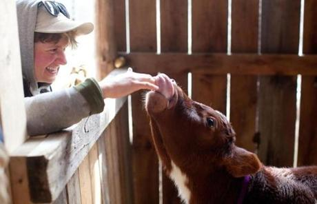 Student farmer Sarah Habeck of Middletown, N.J., pets a baby ox.